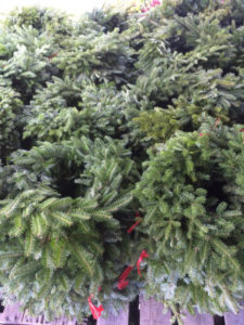 Machias Bay Maine Wholesale Balsam Christmas Wreaths